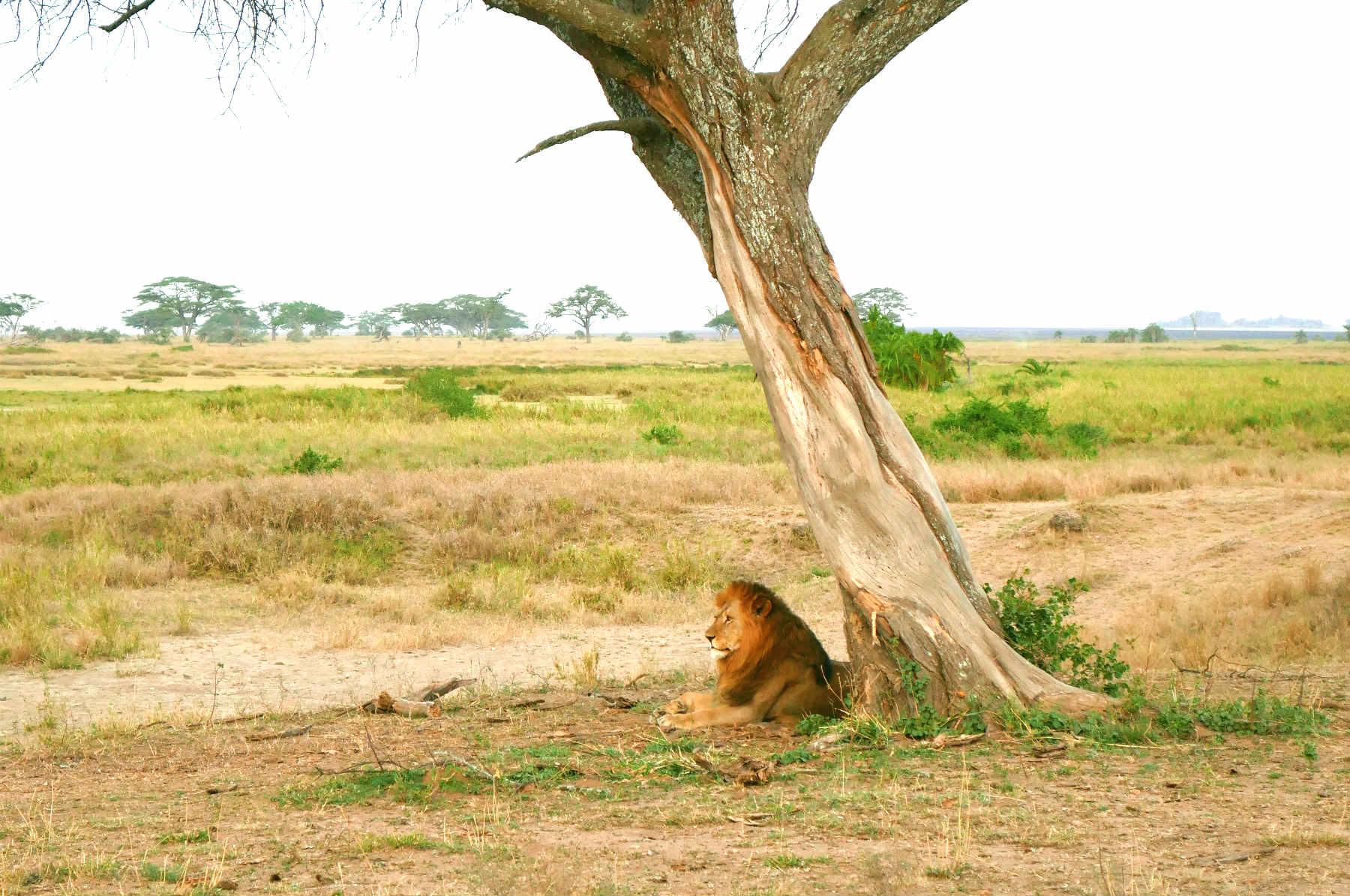 How To Plan A Tanzania Safari On A Budget